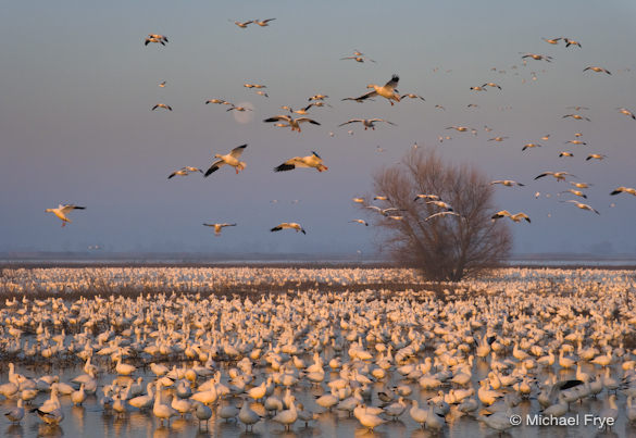 6. Sunrise, moonset, and Ross's geese