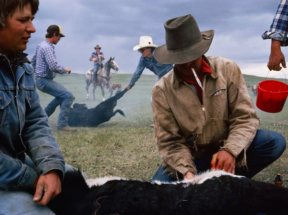 Sam Abell's classic image of cowboys branding cattle in Montana