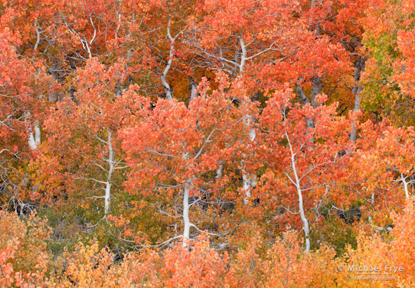 Early-season aspens above Conway Summit (October 4, 2004)