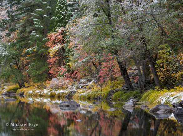 Dogwoods along the Merced River, Friday, 9:09 a.m.