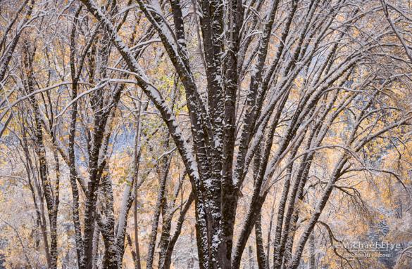 Backlit oaks, 9:57 a.m., Saturday