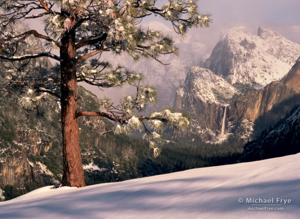 Bridalveil Fall and jeffrey pine, winter, Yosemite NP, CA, USA