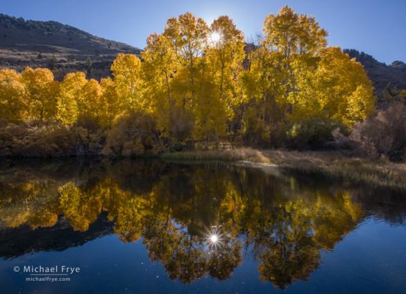 Aspens and morning sunlight along Rush Creek, Inyo NF, CA, USA