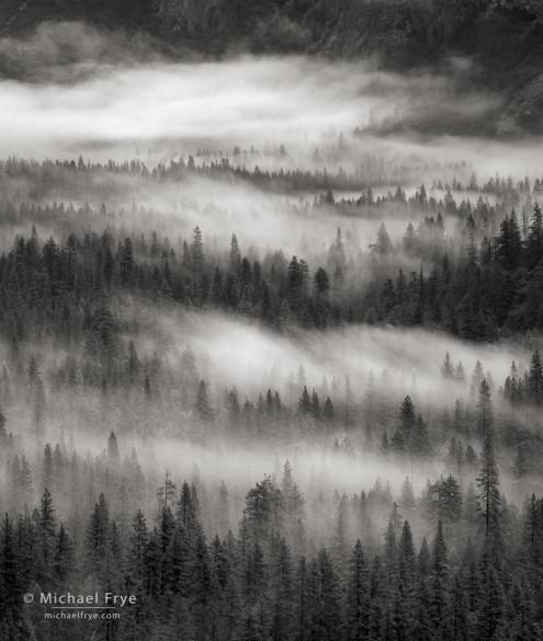 Trees and fog, Yosemite Valley, Yosemite NP, CA, USA