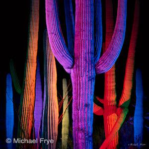 Light-Painted Saguaro Cacti