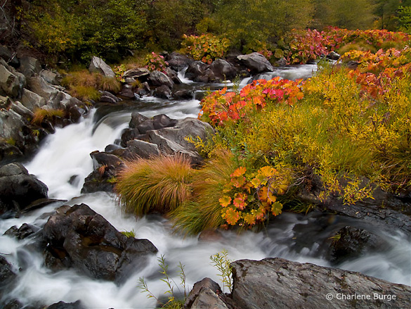 """A Walk Along the Cascades"" by Charlene Burge"