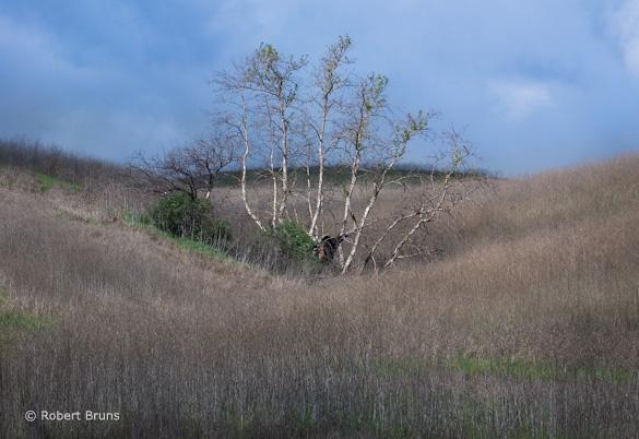 """Chino Hills SP 1"" by Robert Bruns"