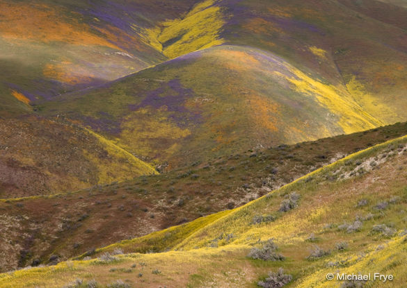 Wildflowers in the Temblor Range, April 3rd, 2010