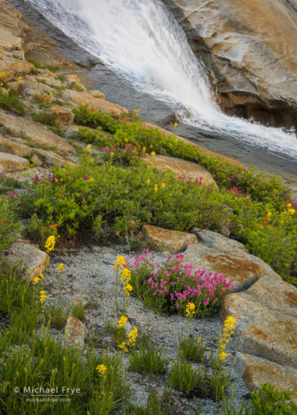 Wildflowers and cascade, Yosemite NP, CA, USA