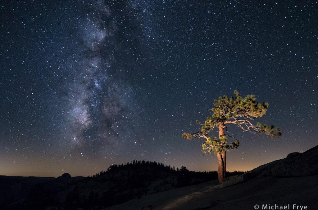 Jeffrey Pine Under the Stars