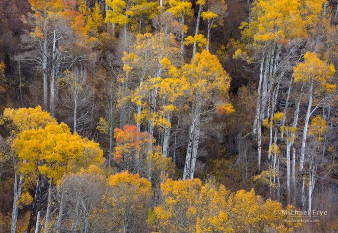 Autumn hillside, Inyo NF, CA, USA