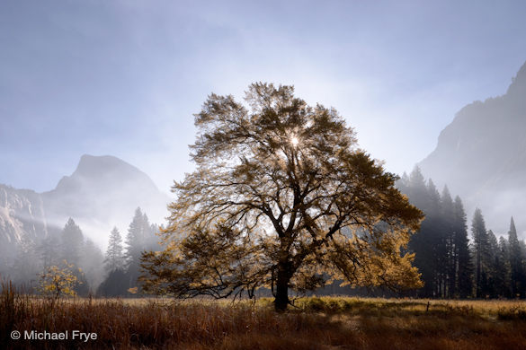 Autumn morning, Half Dome and elm tree, Cook's Meadow