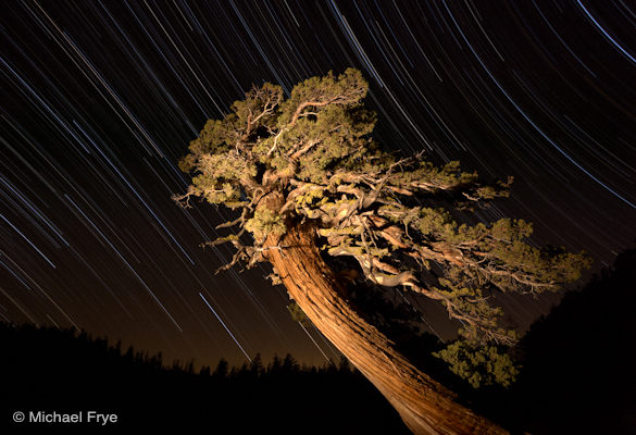 Juniper and star trails near Olmsted Point, Yosemite