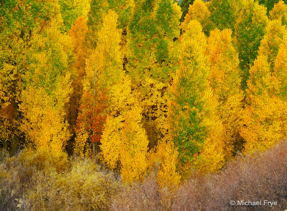 Yellow and green aspens in Lee Vining Canyon (from a few years ago)