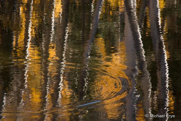 Aspens reflected in Green Creek