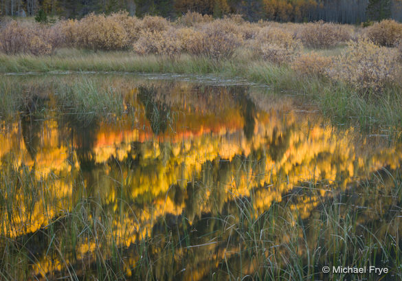 Colorful hillside reflected in a beaver pond