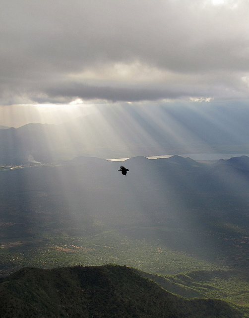 """Raven Over the Rift Valley, Tanzania"" by David Silva"