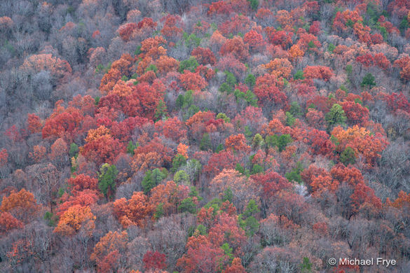 Red oaks from Caesar's Head State Park