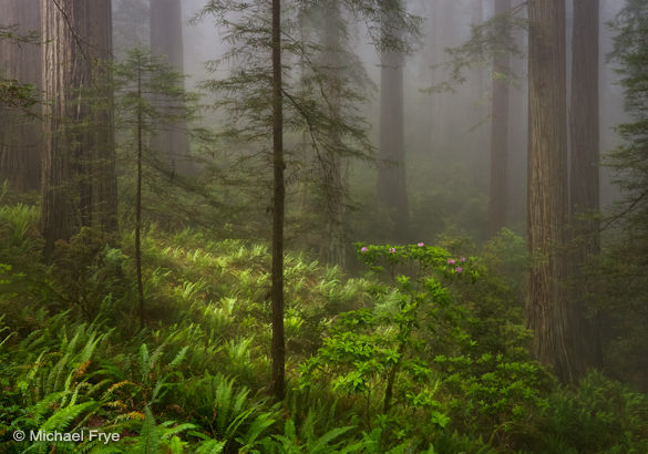 20. Redwoods, ferns, and rhododendrons