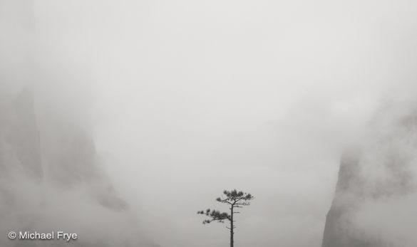 28. Bonsai tree, Tunnel View