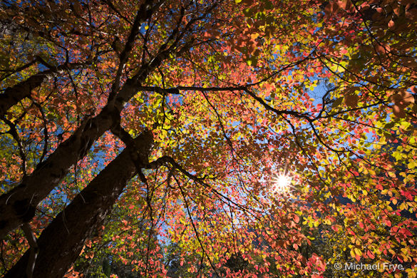 34. Autumn dogwood near Valley View