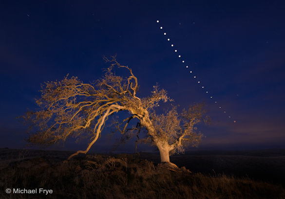 41. Oak tree and lunar eclipse sequence, Sierra foothills