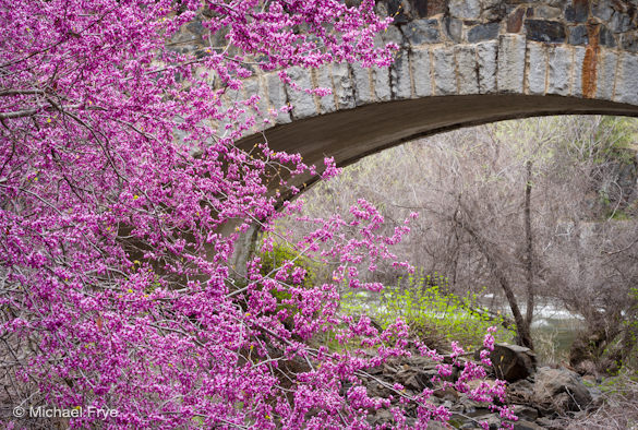 Redbud and the Slate Creek Bridge, yesterday afternoon