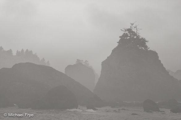 Misty sea stacks with bonsai trees near Trinidad