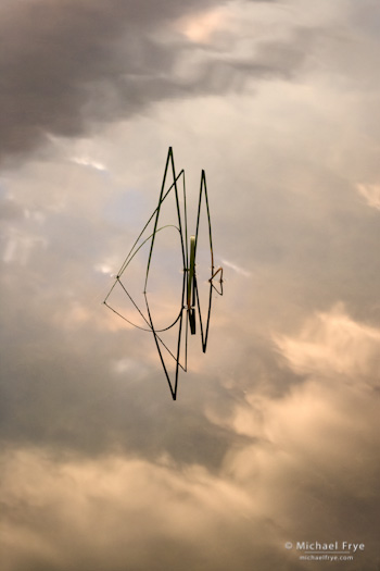 Reeds and Cloud Reflections no. 1