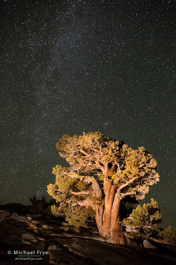 Sierra juniper and the Milky Way, Olmsted Point, Yosemite
