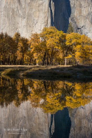 El Capitan, California black oaks, and the Merced River, 2007