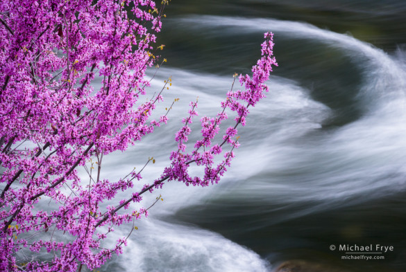 Redbud and swirling water in the Merced River, Merced River Canyon, near Briceberg, CA, USA