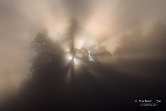 Sun rising through fog, Prairie Creek Redwoods SP, CA, USA