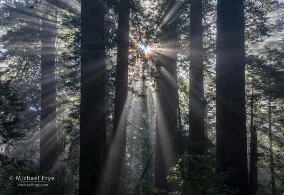 Sunbeams and corona, Del Norte Coast Redwoods SP, CA, USA