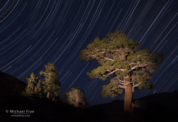 Spot Removal Lightroom: Star Trails and junipers east of Sonora Pass, Toiyabe NF, CA, USA
