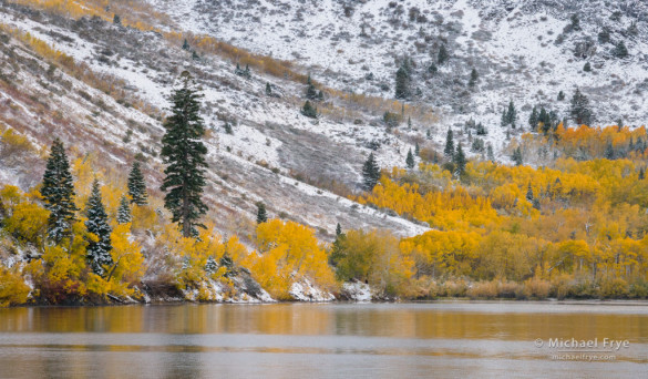 Autumn color along the shore of Convict Lake, Inyo NF, CA, USA