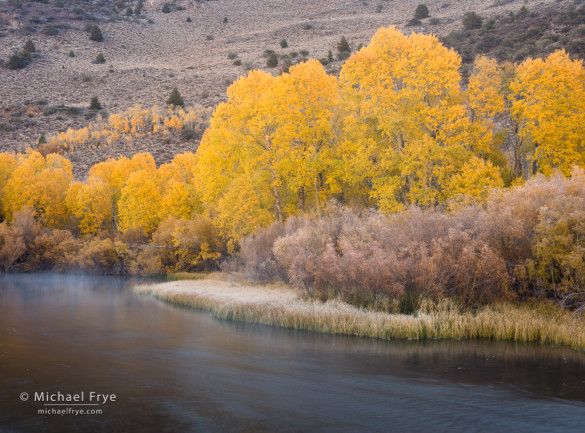 Autumn along a creek in the eastern Sierra Nevada, Inyo NF, CA, USA
