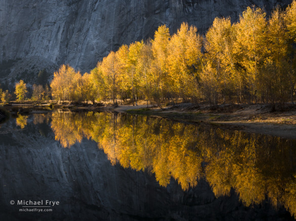Cottonwood trees along the Merced River, autumn, Yosemite NP, CA, USA