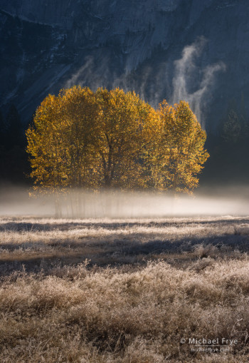 Mist rising from cottonwood trees, Yosemite NP, CA, USA