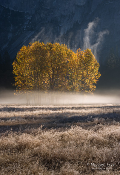 Mist rising from cottonwood trees, Yosemite NP, CA, USA