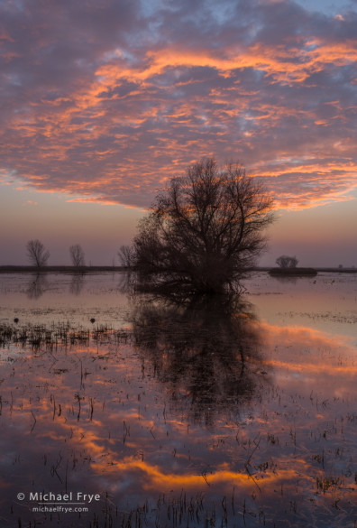 Sunset over marshes in the San Joaquin Valley, CA, USA