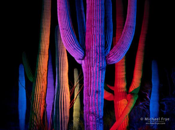 Saguaro cacti at night, Saguaro NP, AZ, USA