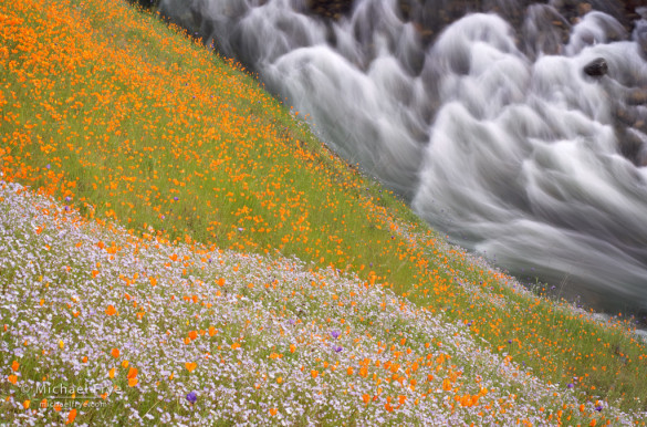 Wildflowers above the South Fork of the Merced River, Sierra NF, CA, USA