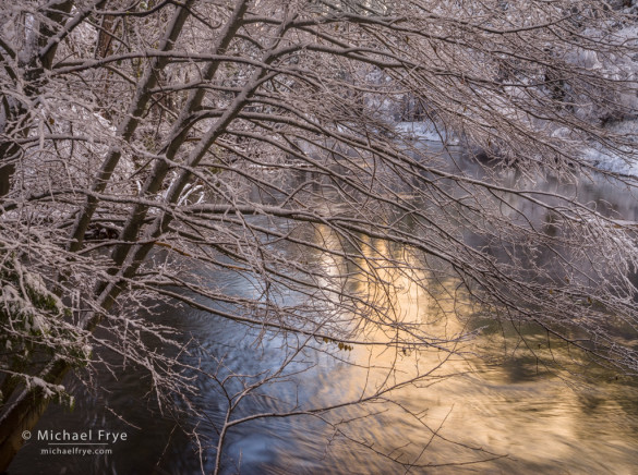 Snow-covered alder and reflections in the Merced River, Yosemite NP, CA, USA