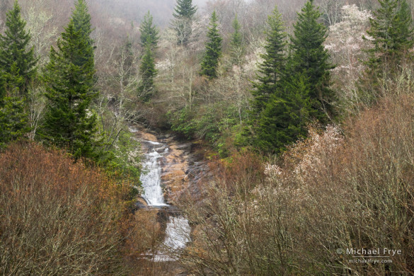 Waterfall, balsam firs, and blooming sarvis, just north of the parkway along Highway 215