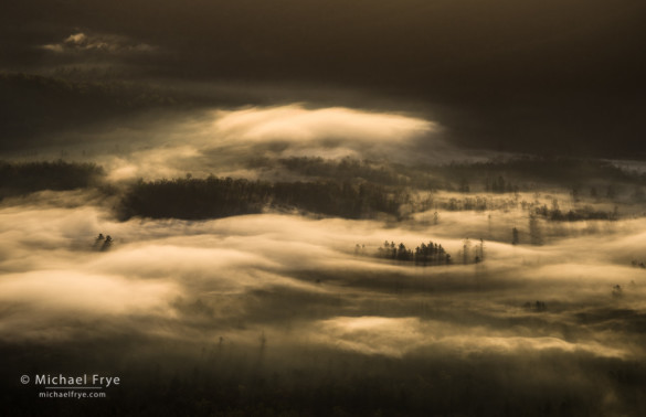 Trees in fog at sunrise from the Pounding Mill Overlook, Blue Ridge Parkway, NC, USA