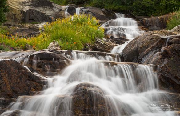 Wildflowers island and cascade, eastern Sierra, CA, USA