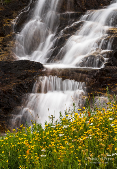 Wildflowers and waterfall, eastern Sierra, CA, USA