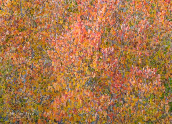 Aspen-leaf kaleidoscope, Rock Creek Canyon, Inyo NF, CA, USA