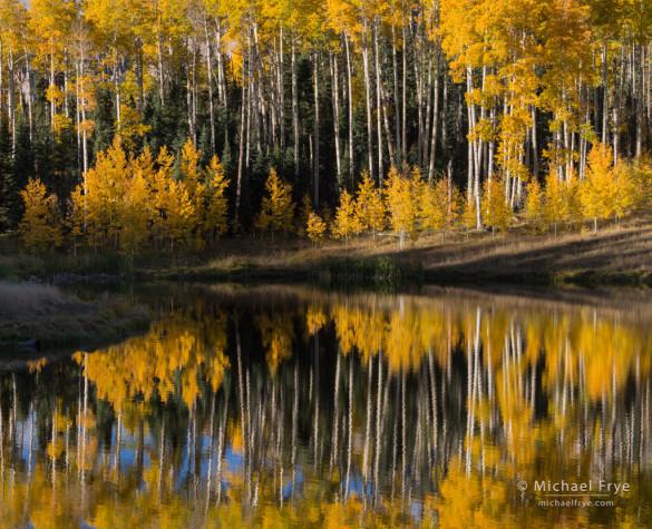 Aspen reflections, Uncompahgre NF, CO, USA